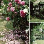 ATERIER Rose Garden ローズガーデン